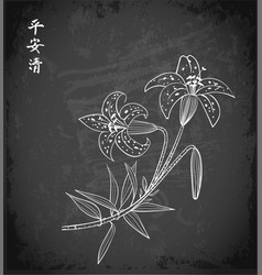 lily flowers in oriental style on blackboard vector image