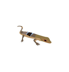 lizard animal in cartoon style isolated on white vector image