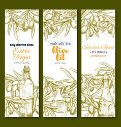 Olive oil sketch banner set for food design vector