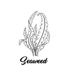 Seaweed black ink vector