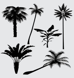 tropical palm tree silhouettes isolated vector image