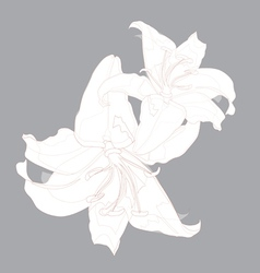 lily design vector image vector image