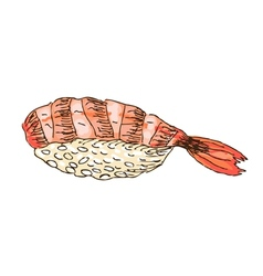 sushi with shrimp vector image
