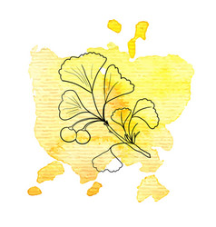 branch of ginkgo at watercolor background vector image
