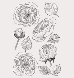 blooming flower set collection hand drawn vector image