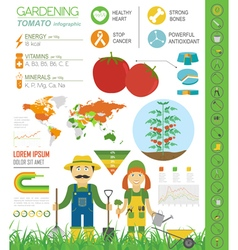 Gardening work farming infographic tomato graphic vector