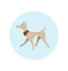 Image With Pretty Walking Italian Greyhound vector