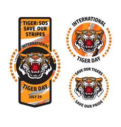 international tiger day badge template set vector image