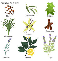 Large set of popular essential oils from which vector