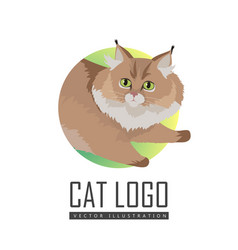 maine coon cat flat design vector image