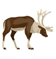 male deer icon cartoon style vector image