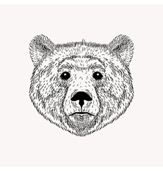 Sketch realistic face Bear Hand drawn in Doodle vector