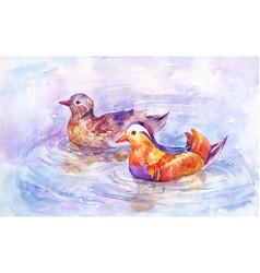 two mandarin ducks swim on the lake pair of vector image