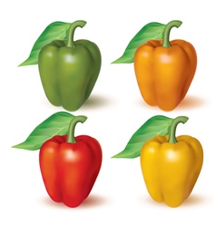 Bell peppers vector