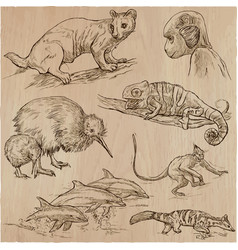 animals - an hand drawn pack collection vector image vector image