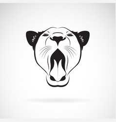 female lion open mouth on white background wild vector image vector image