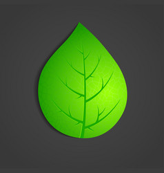 green leaf on dark background vector image vector image