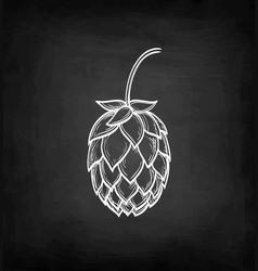 chalk sketch of hops vector image