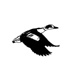 Duck-Flying-380x400 vector
