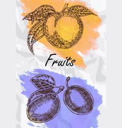 hand drawn fruit vector image