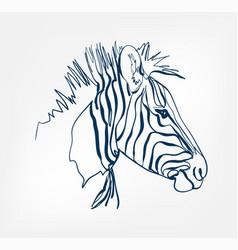 zebra animal wild one line design vector image