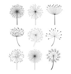 Black and White Dandelions Set vector image