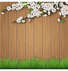 grass and spring cherry branch on brown old wood vector image vector image