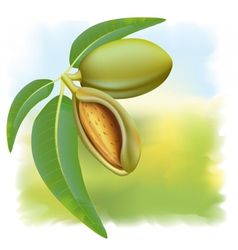 Almonds branch vector
