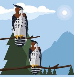 Beautiful hawks in tree branch majestic birds vector