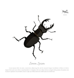 Detailed drawing of beetle deer vector image