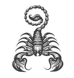scorpion engraving vector image