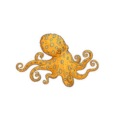 yellow octopus sketch marine animal icon vector image
