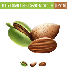 Almond on white background vector