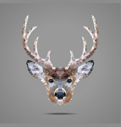 Deer low poly portrait vector image