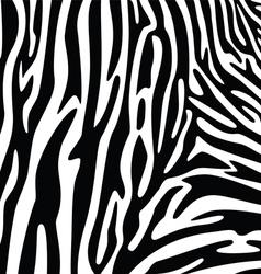 abstract skin texture of zebra vector image vector image