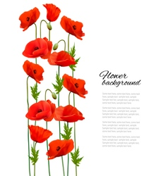 Flower background with poppies vector image vector image