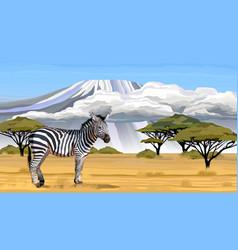 african zebra on white background vector image