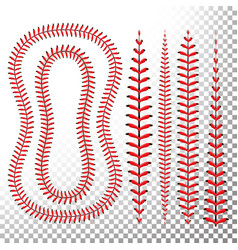 Baseball stitches lace from a baseball vector