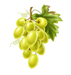 red grape bunch with ripe berry and leaf vector image