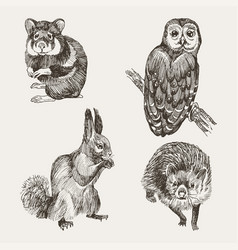Set of highly detailed hand drawn squirrel owl vector