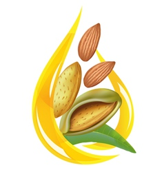 almond oil vector image vector image