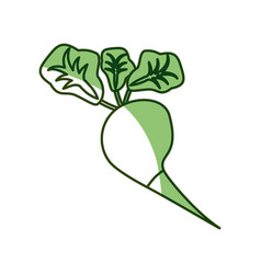 Delicious radish vegetable vector