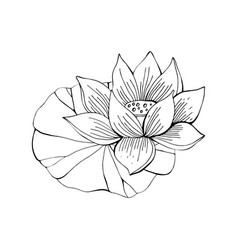 lotus flower drawn in black and white line in vector image