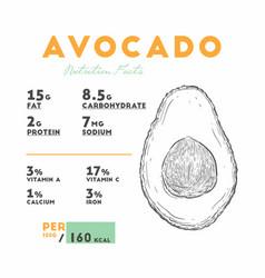 Nutrition facts avocado hand draw sketch vector