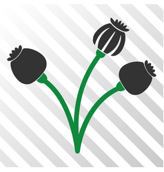Opium poppy plant eps icon vector