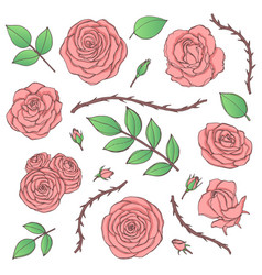 Set of pink rose flowers with buds leaves vector