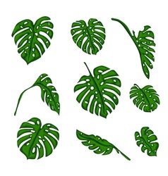 A set of Botanical tropical fern leaves to create vector image