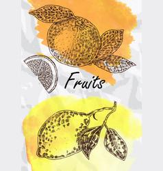 lemon and orange fruits vector image