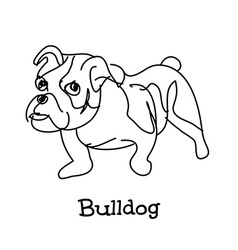 Young bulldog vector image