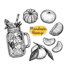 Ink sketch of tangerines vector